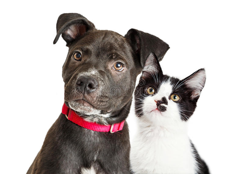 Puppy and Kitten Closeup Over White stock photos