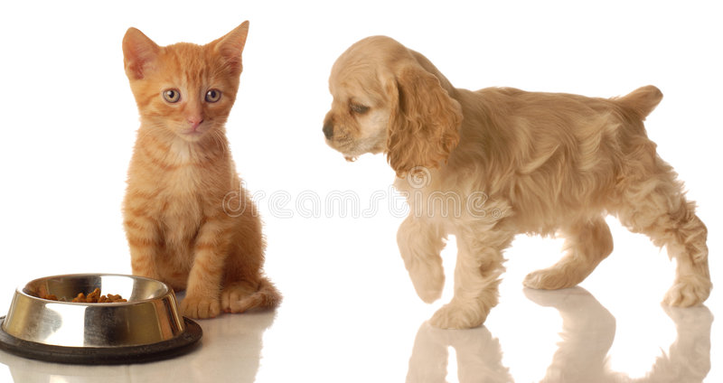 Puppy and kitten with food royalty free stock image