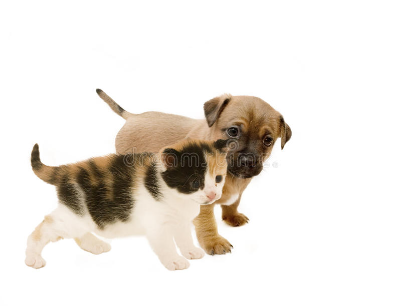 Puppy and Kitten Friends. stock images