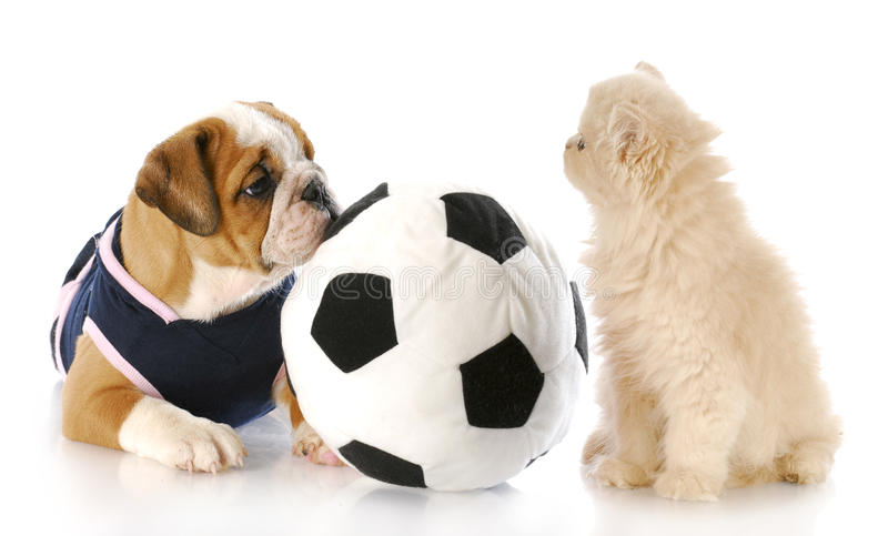 Puppy And Kitten Playing Together Stock Photo - Image of ...