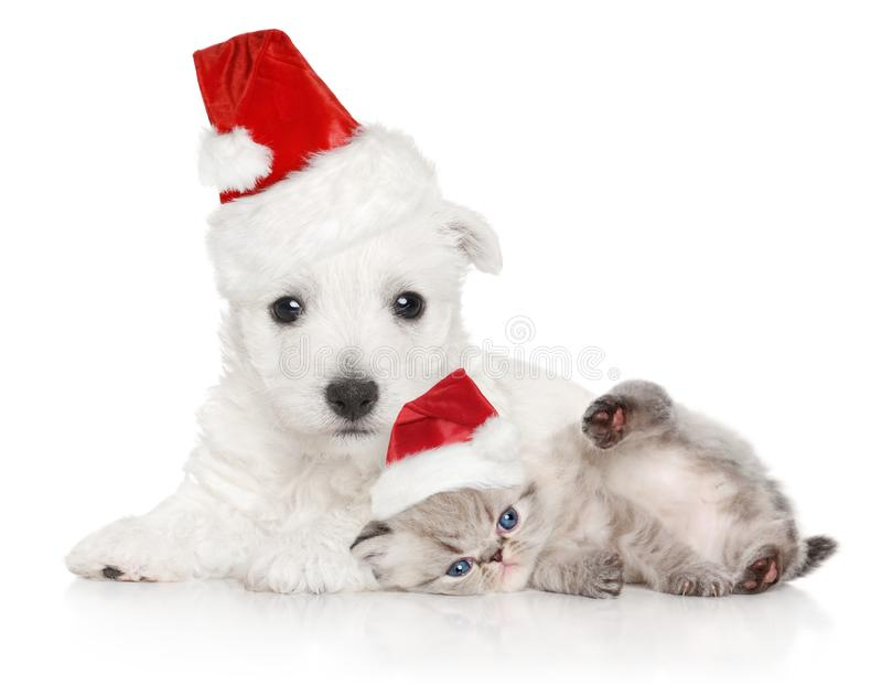 Puppy and kitten in Santa red cap on white stock image