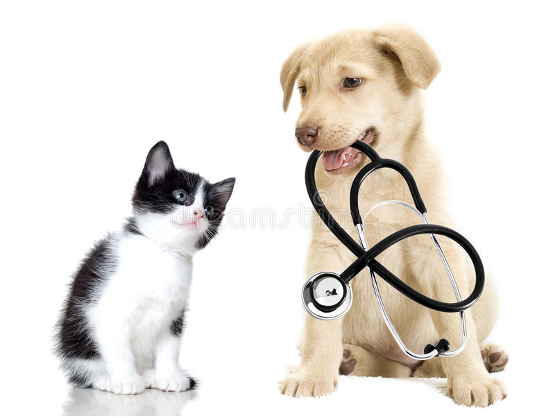 Puppy and kitten. Kitten and puppy with a stethoscope on a white background