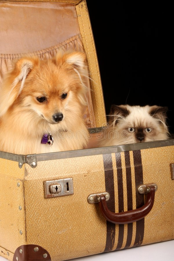 Puppy And Kitten In Suitcase Royalty Free Stock Photography