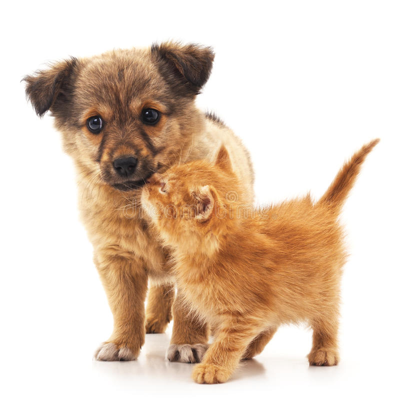 Puppy and kitten. stock photos