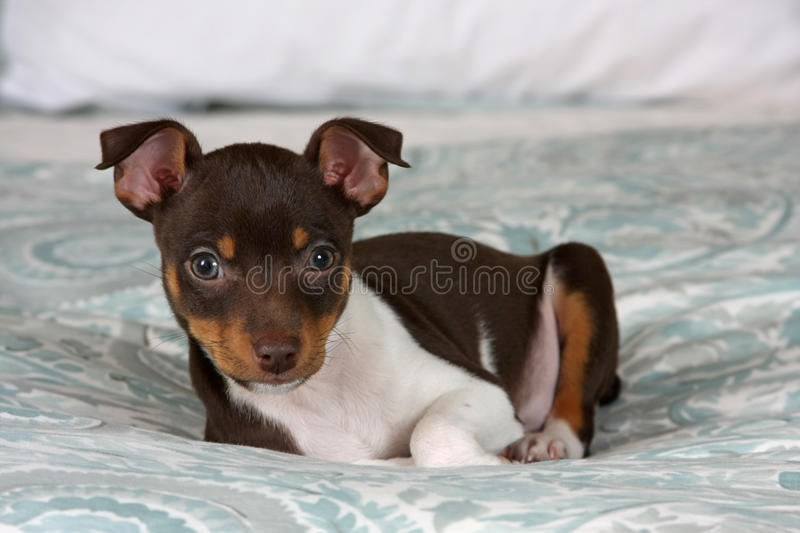 Puppy Leaning stock photo