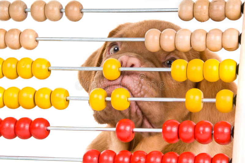 Download Puppy learning to count stock image. Image of portrait - 12076389