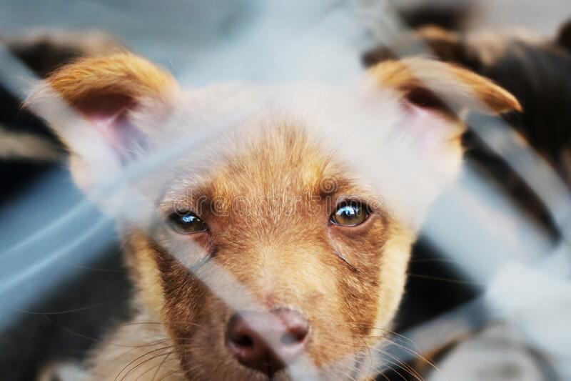 Puppy locked in the cage looking with hope stock photo