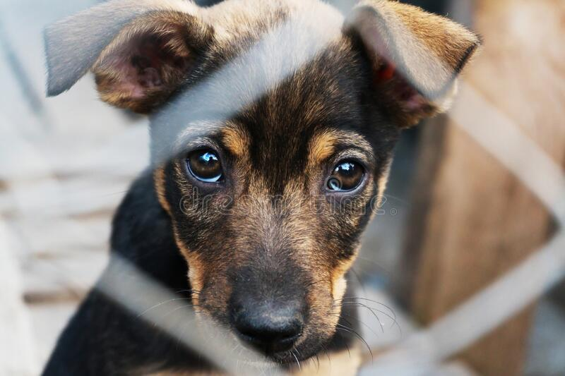 Puppy locked in the cage looking with hope stock image