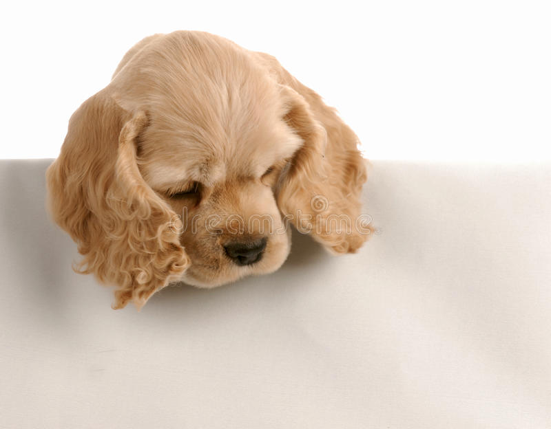 Download Puppy Looking Over Foreground Stock Photography - Image: 10663882