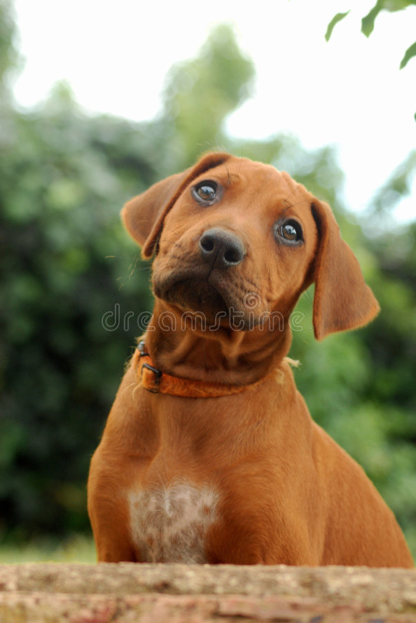 Puppy Looking Up Stock Photos