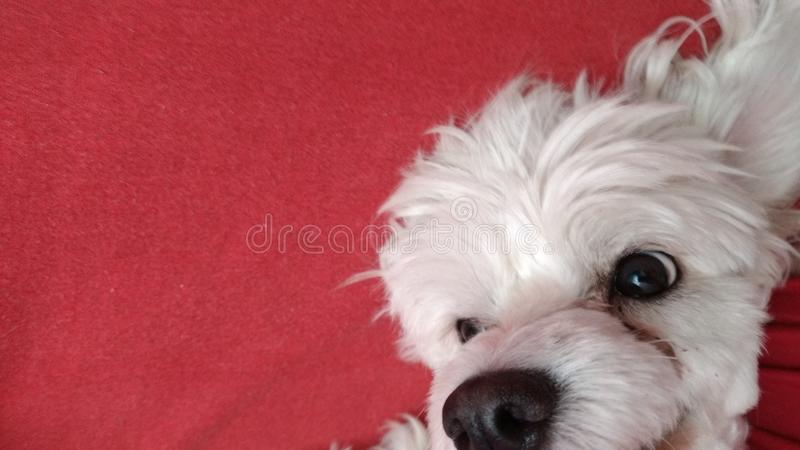 Puppy looking up stock image