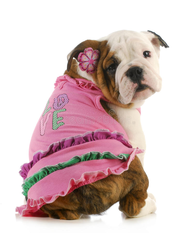 Free Puppy Love Stock Photo - 28141980