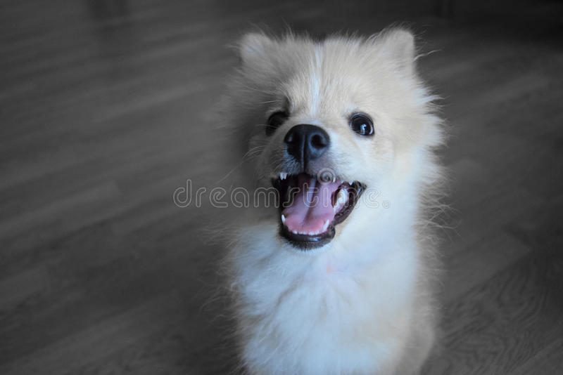 Puppy Love royalty free stock photography