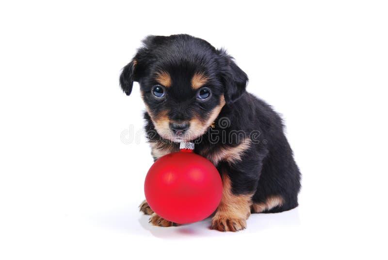 Puppy met de bal van Kerstmis stock fotografie