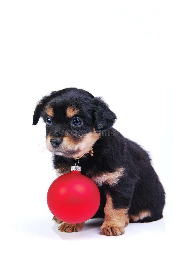 Puppy met de bal van Kerstmis royalty-vrije stock afbeelding