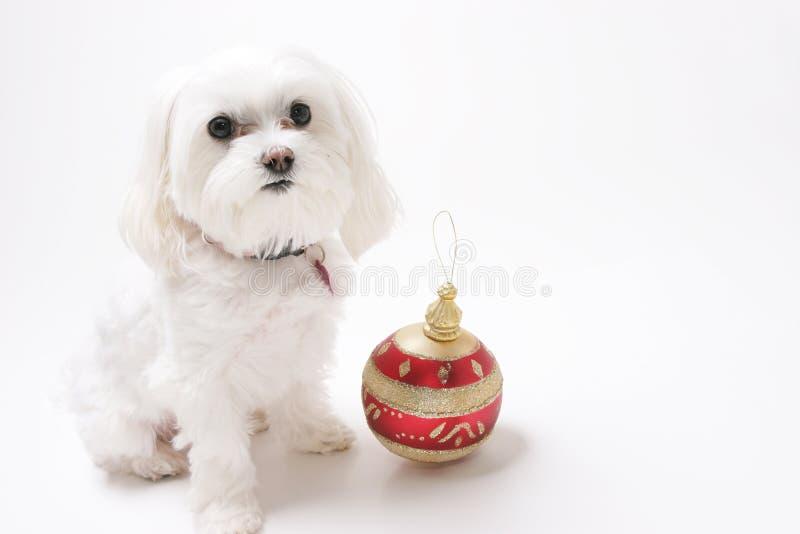 Puppy met de Ornamenten van Kerstmis royalty-vrije stock foto