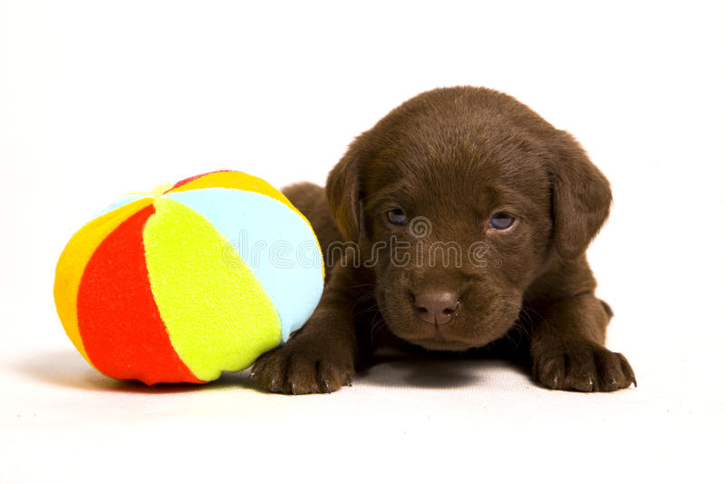 Puppy met een bal royalty-vrije stock afbeeldingen