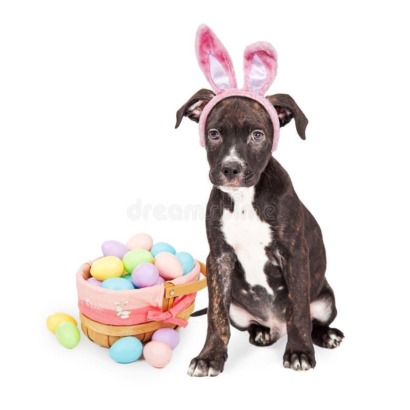 Puppy met Pasen Bunny Ears en Mand stock fotografie