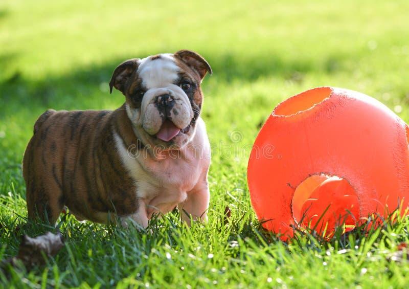 Puppy met stuk speelgoed stock foto's