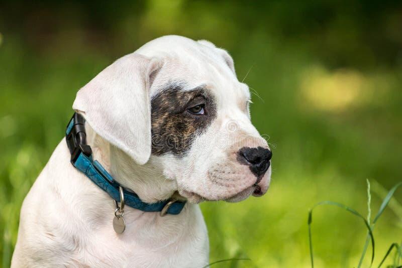 Puppy met zwart oog stock afbeelding