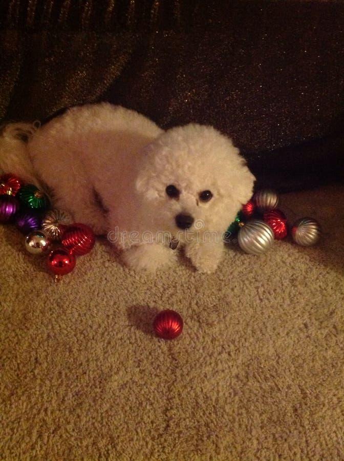 Puppy& x27; Natale di s prima immagini stock libere da diritti