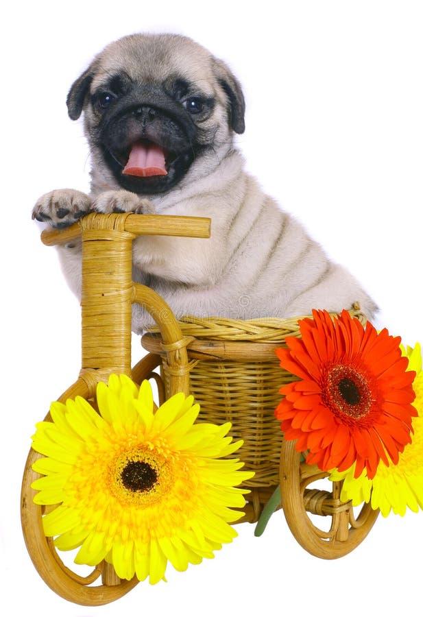 Puppy op een decoratieve fiets met bloemen. stock foto's
