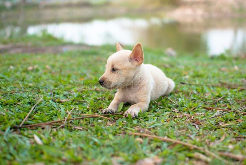 Download Puppy op grasgebied stock afbeelding. Afbeelding bestaande uit bruin - 54083649