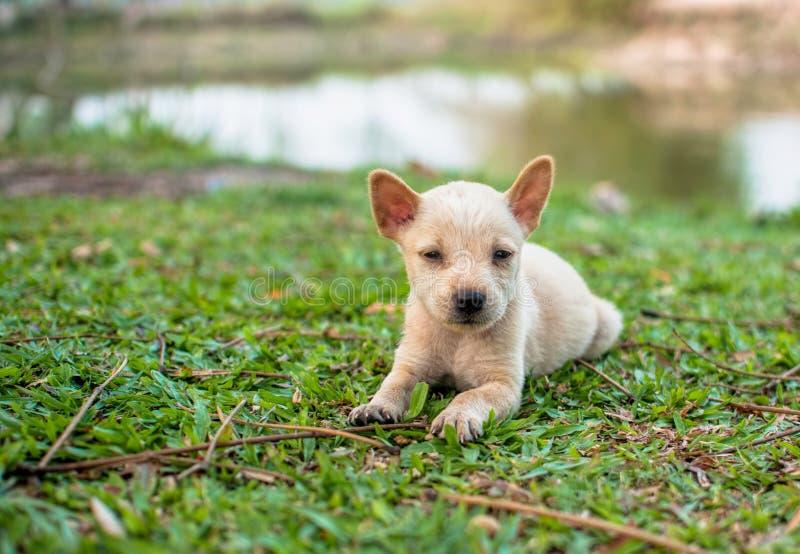 Download Puppy op grasgebied stock foto. Afbeelding bestaande uit gezicht - 54083652