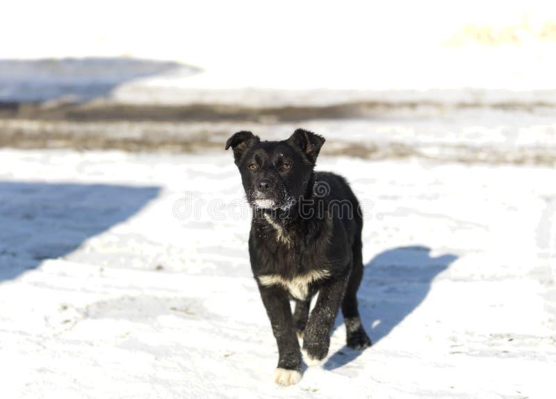 Puppy op sneeuw royalty-vrije stock afbeelding