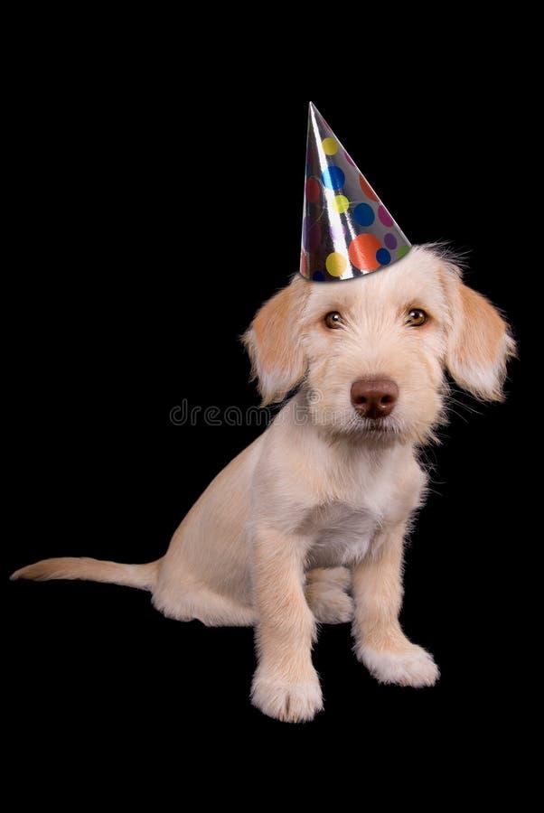 Puppy in partijhoed royalty-vrije stock fotografie