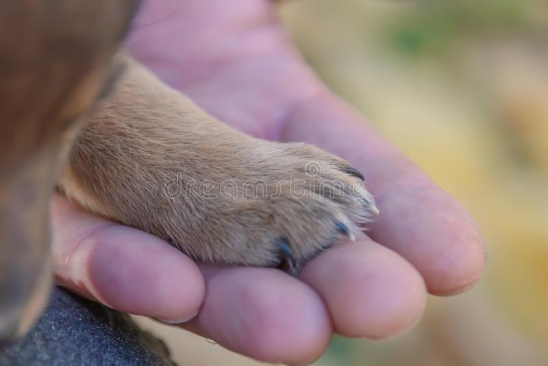 Puppy paws on a man`s hand. animal shelter. puppy adoption stock image