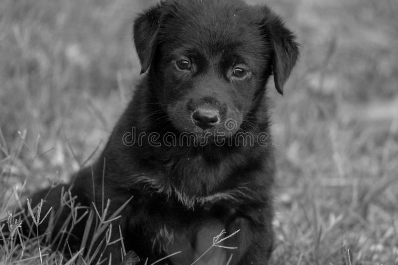 Puppy Phototgraphy stock photos