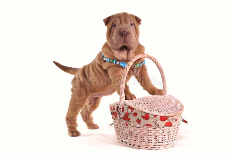 Puppy with Picnic Basket stock image