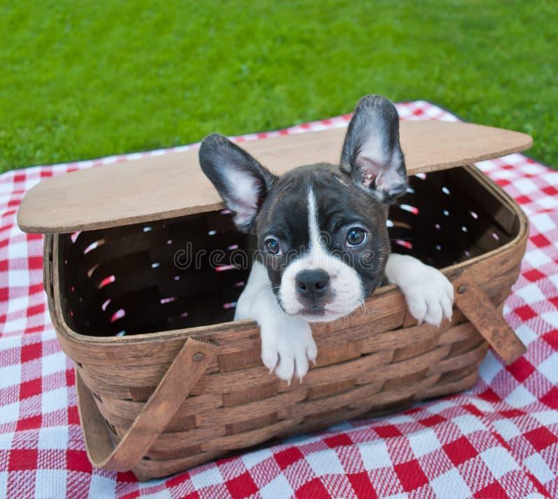 Puppy Picnic stock image