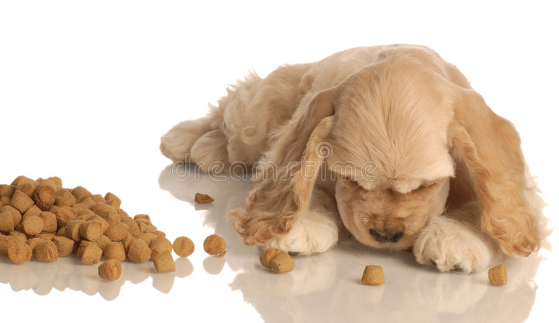 Puppy with pile of dog food royalty free stock photography