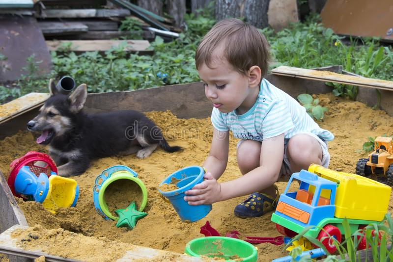 Puppy playing with a child in the sandbox royalty free stock photo