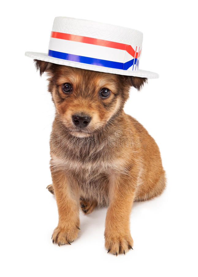 Download Puppy Politician stock image. Image of patriotism, innocent - 29172957