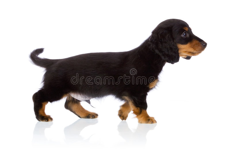 Puppy portrait stock images