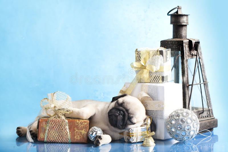 Download Puppy pug and gifts stock photo. Image of glitter, wool - 22107030