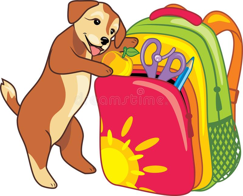 Puppy puts an apple in a school backpack royalty free stock photos