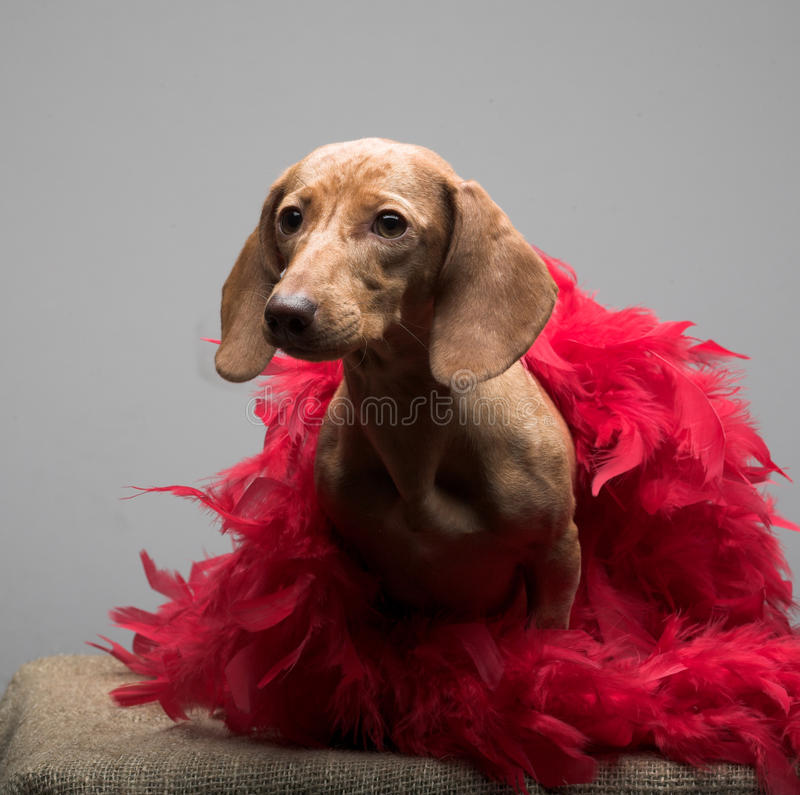 Download Puppy rate stock image. Image of adorable, happy, adult - 10808321