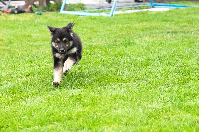 puppy running στοκ φωτογραφίες