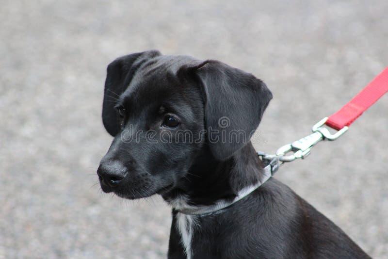 Puppy's eyes stock image