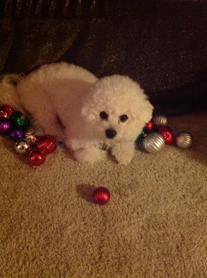 Puppy& x27;s first Christmas royalty free stock images