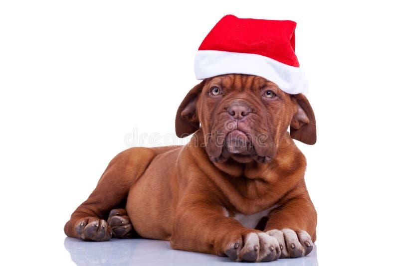 Puppy with a santa cap stock photos