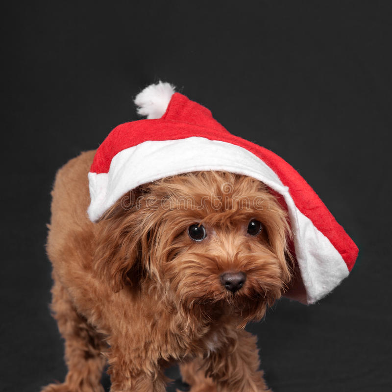 Puppy in Santa Claus cap stock photography