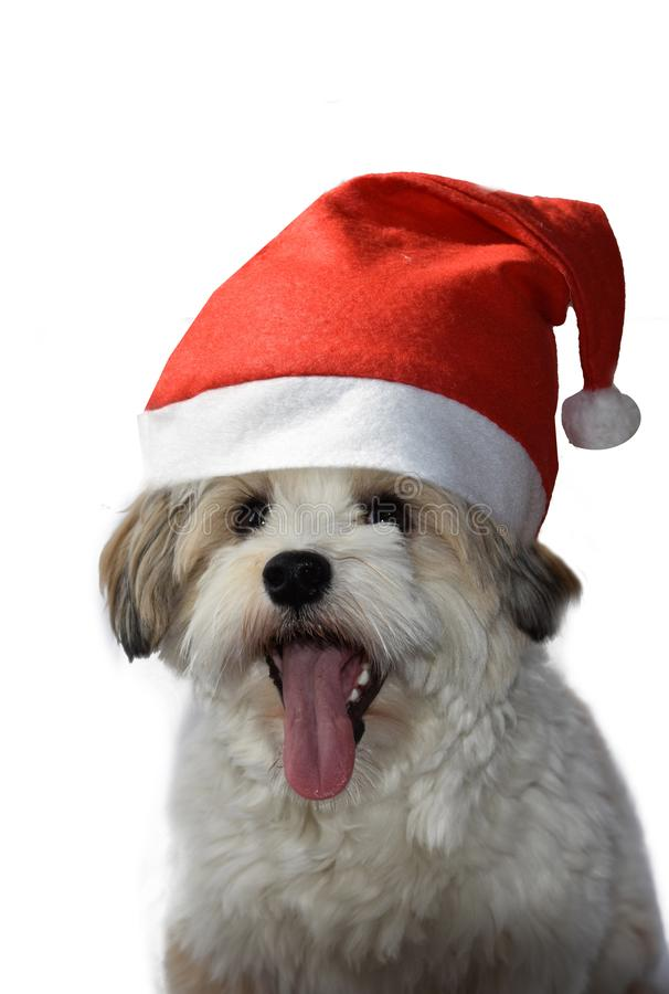 Puppy with santa Claus hat royalty free stock images