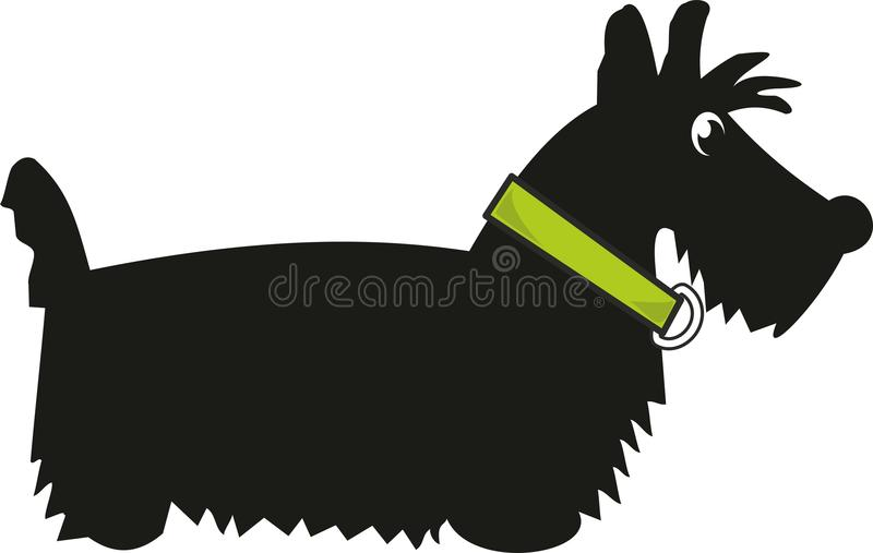Puppy Scotch Terrier Stock Photography
