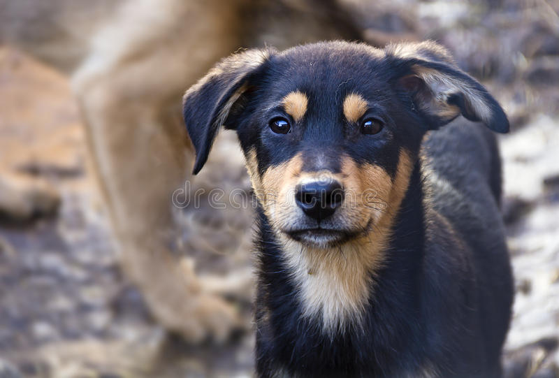 Puppy in a shelter for homeless dogs. royalty free stock images