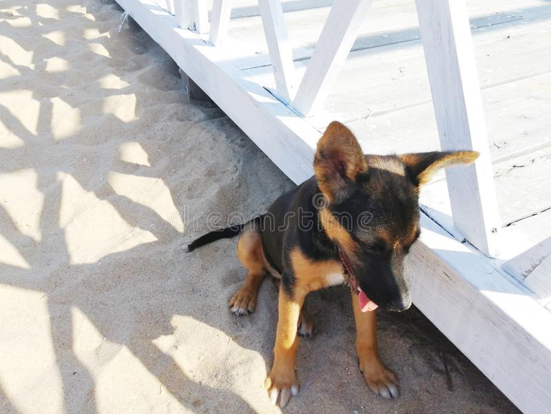 Puppy sits on the sand in a shade royalty free stock images